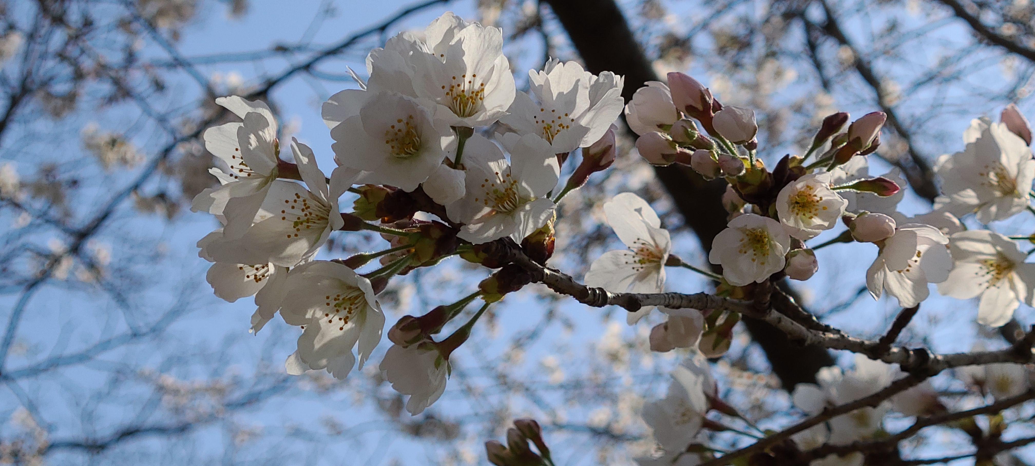 春の訪れ…💮そして別れ…
